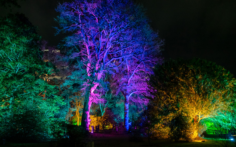 Westonbirt Arboretum Enchanted Christmas