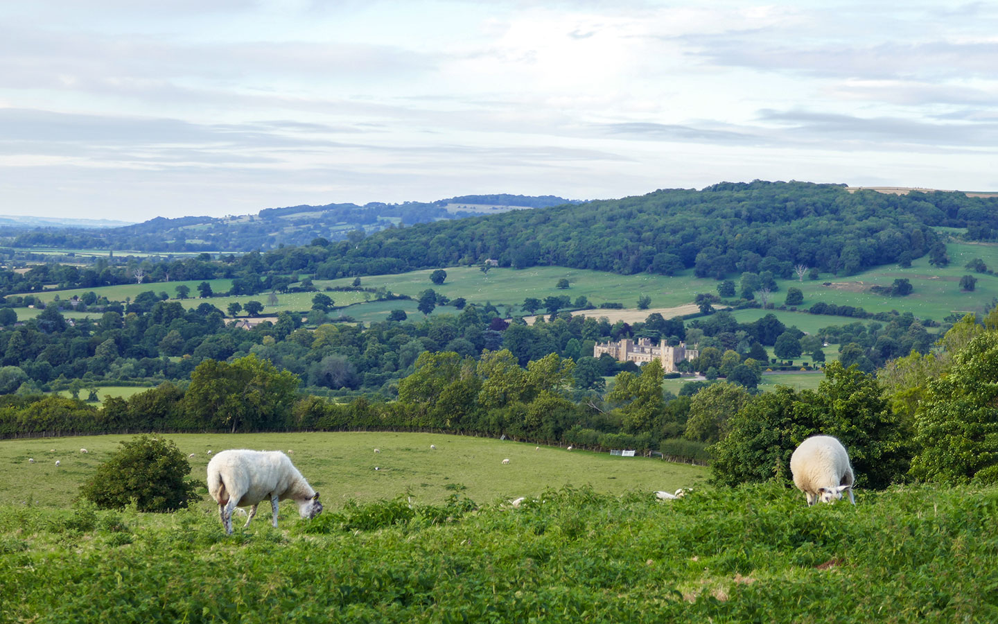 Cotswold walk from Cleeve Hill to Winchcombe