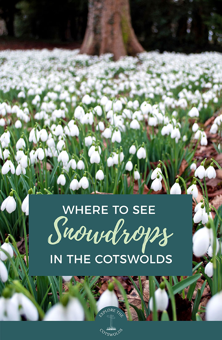 The best places to see snowdrops in the Cotswolds – where to see these beautiful winter blooms in the Cotswolds' country houses and gardens, including Colesbourne Park, Painswick Rococo Garden and Cerney House Gardens | Snowdrops in the Cotswolds | Cotswolds gardens | Things to do in the Cotswolds | Spring in the Cotswolds