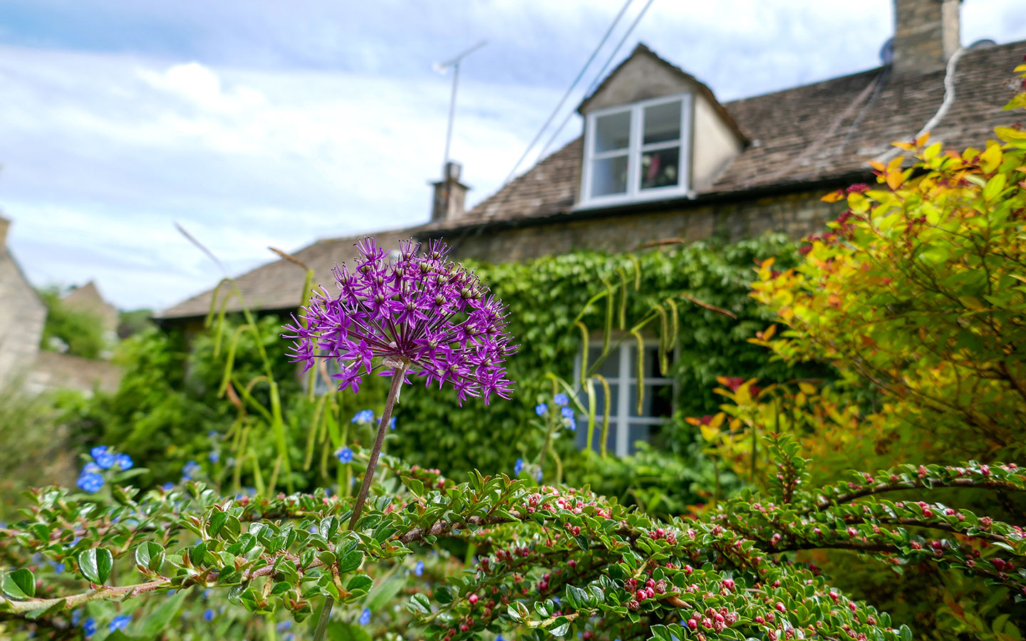 Flower-covered houses on the Chipping Steps in Tetbury