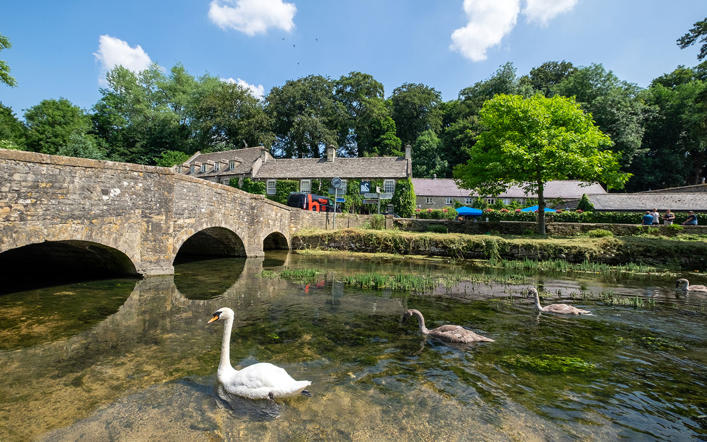 Swans on the River Coln in Bibury