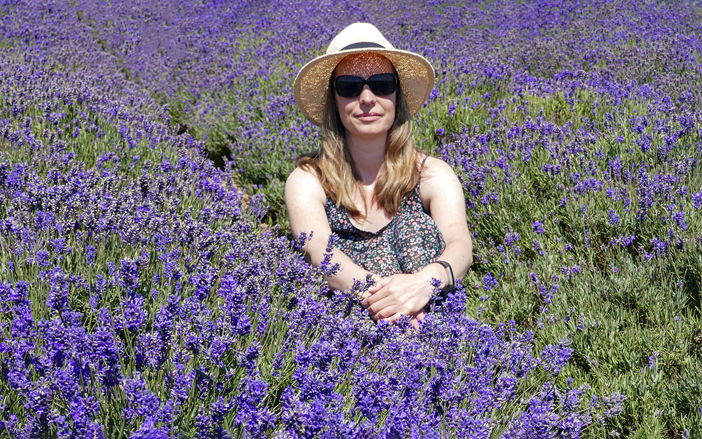 Photo opportunities in the Cotswold Lavender fields