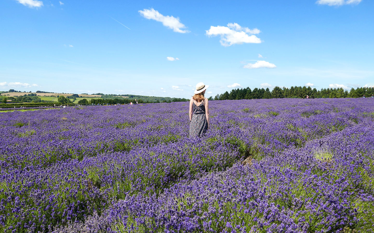 A sea of purple flowers – photo shoot at the Cotswold Lavender fields