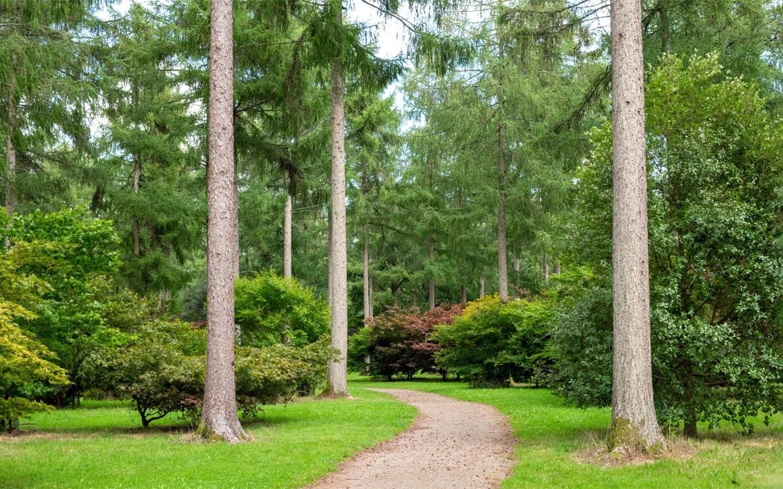Westonbirt Arboretum near Tetbury in the Cotswolds