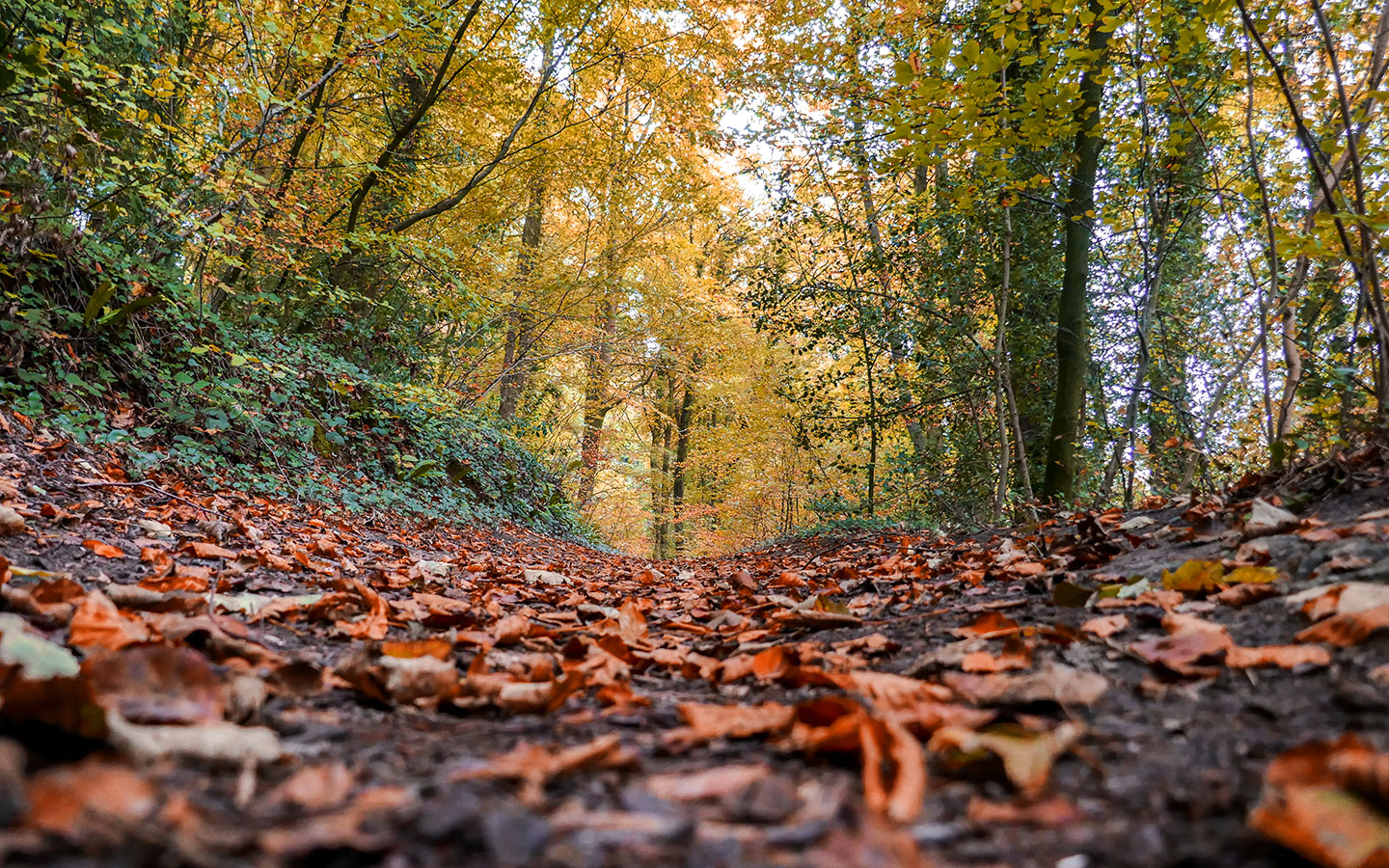 Walks in the woods in the Cotswolds in autumn