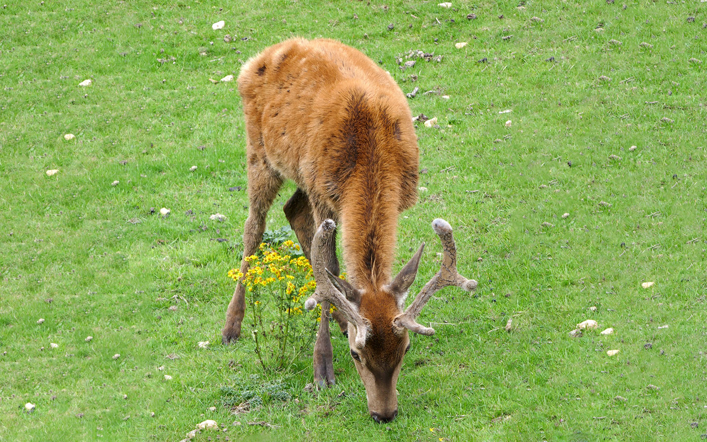 Deer at the Broadway Tower in the Cotswolds